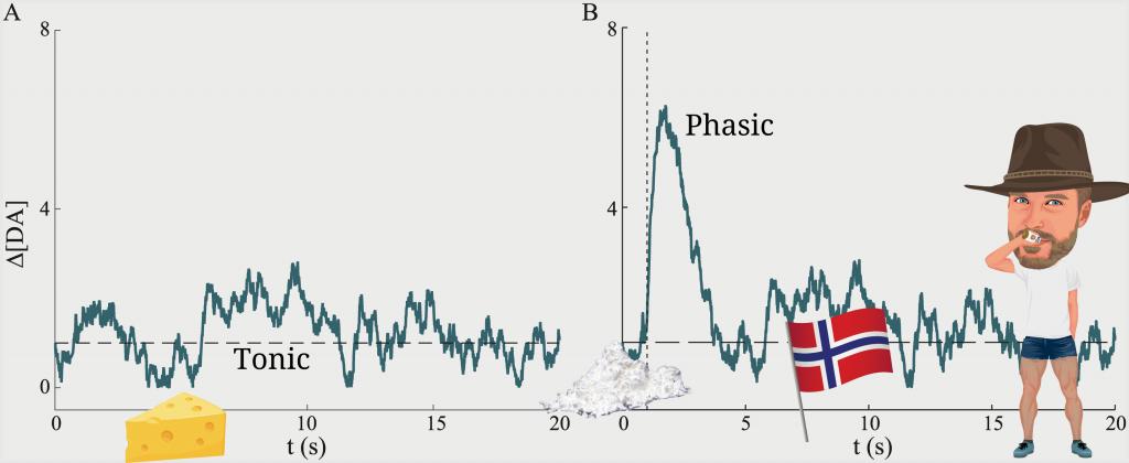 Tonic and Phasic Dopamine release